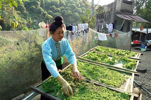 Rêu xanh - Ẩm thực độc đáo của đồng bào Thái Sông Mã