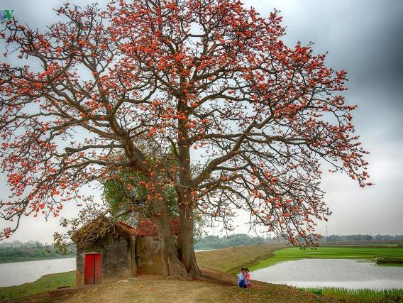 Tín ngưỡng thờ cây trong tiềm thức dân gian Việt