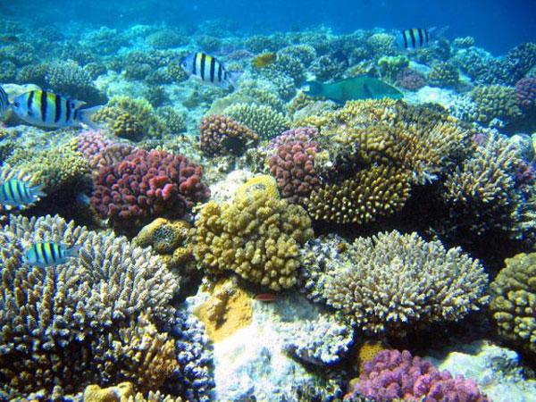 5 điểm ngắm san hô đẹp nhất Việt Nam, nhất định phải khám phá một lần trong đời