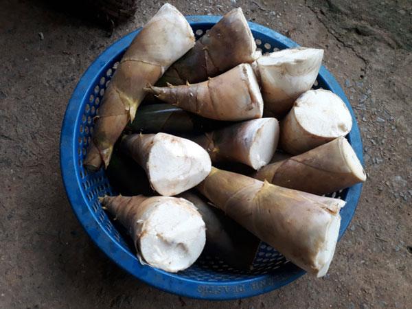 Lên Sơn La thưởng thức măng Bói ngọt thơm