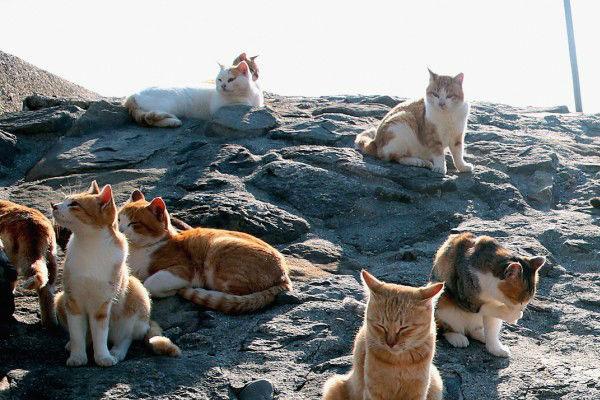 Người Nhật yêu mèo như thế nào