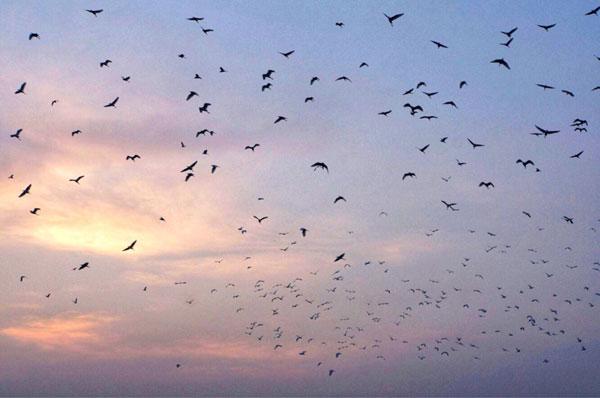 Cảnh sắc thiên nhiên tuyệt đẹp ở Đảo Cò Chi Lăng Nam