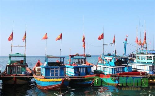 Nghề khai thác rau chân vịt đảo Lý Sơn
