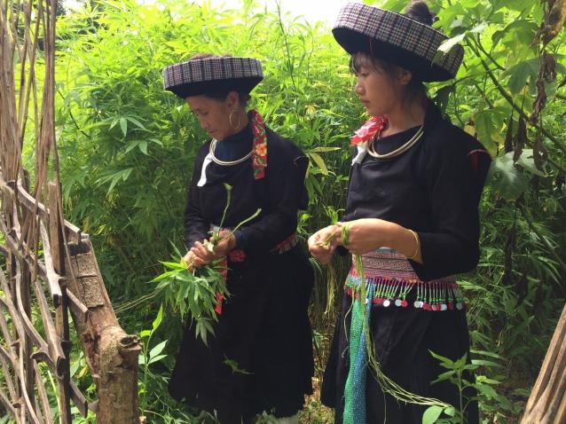 Người Mông xanh giữ nghề dệt vải