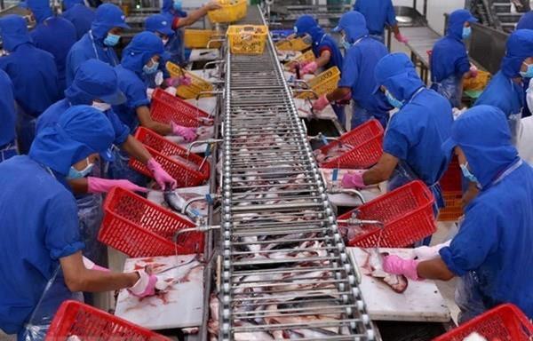 4 doanh nghiệp Việt sẽ xuất khẩu cá tra sang Mỹ với thuế suất 0 USD