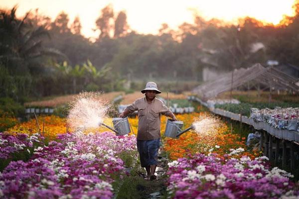Rực rỡ sắc màu làng hoa Sa Đéc khi vào xuân