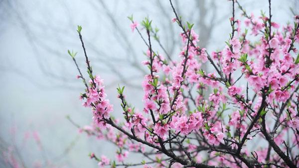 Hà Nội mười hai mùa hoa