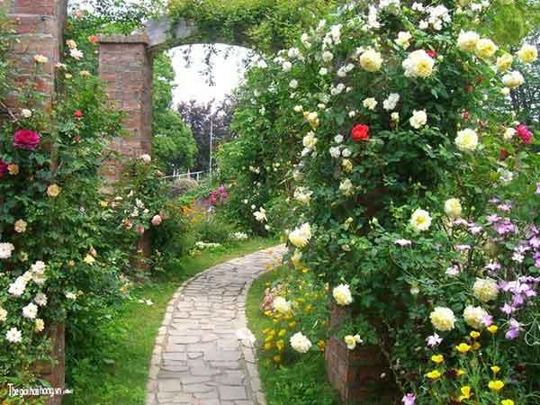 Mùa Xuân qua lối hoa hồng