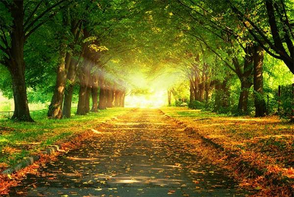 Tha thứ và hành trình hạnh phúc