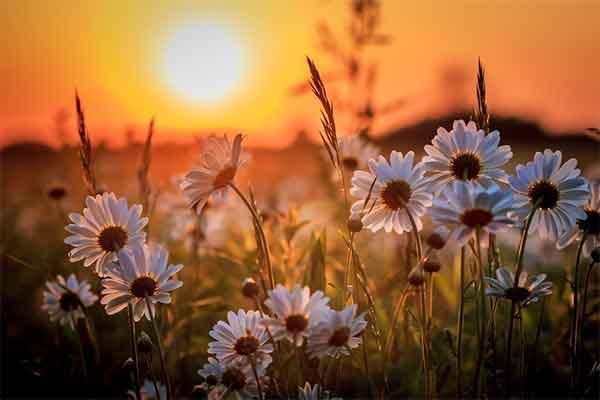 Nghĩ đơn giản, sống đơn thuần, để có một cuộc đời an tĩnh…