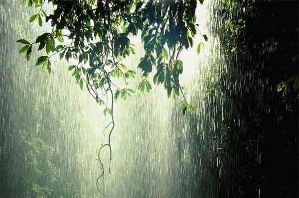 Một chiều mưa tháng Sáu