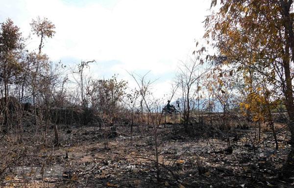 67.000ha rừng nằm trong nguy cơ cháy cao giữa mùa khô hạn
