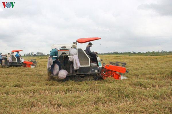 Thị trường xuất khẩu gạo ổn định, kích thích người dân và doanh nghiệp