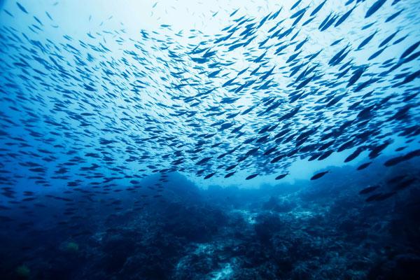 Có phải đại dương đang cạn kiệt cá biển?