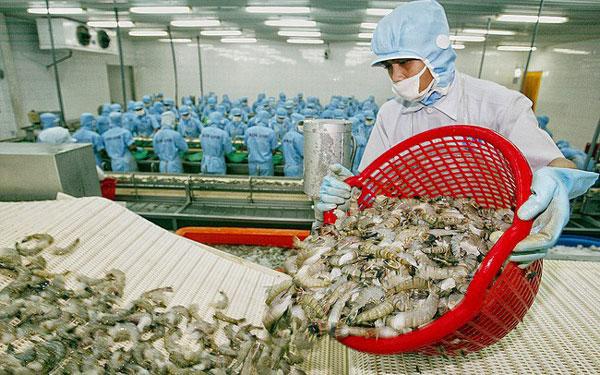 Xuất khẩu tôm sang Mỹ dự báo sẽ tăng khoảng 20% năm 2020