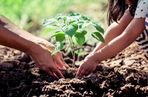 10 cách bảo vệ môi trường để bạn sống khỏe mạnh hơn