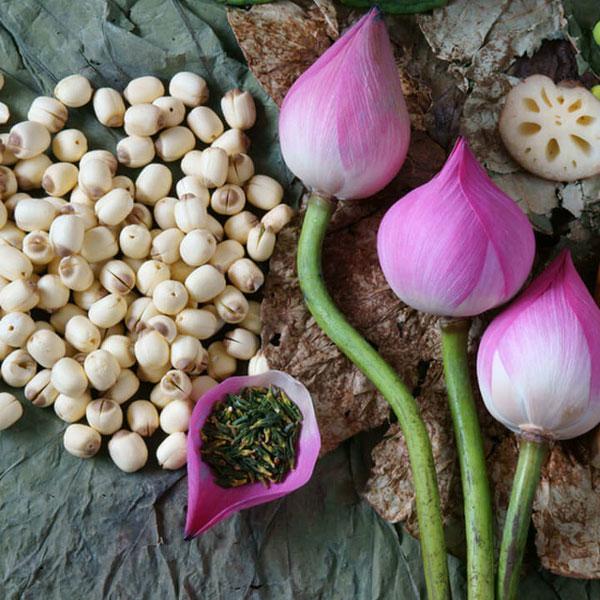 Lợi ích tuyệt vời của hạt sen đối với sức khỏe