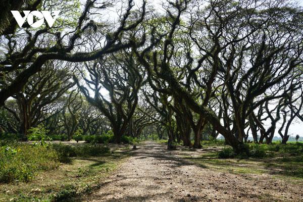 Ngỡ ngàng trước vẻ đẹp cổ tích của rừng còng Djawatan ở đảo Java, Indonesia