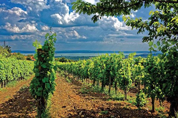 Tokaj - vùng đất thanh bình, ngọt ngào