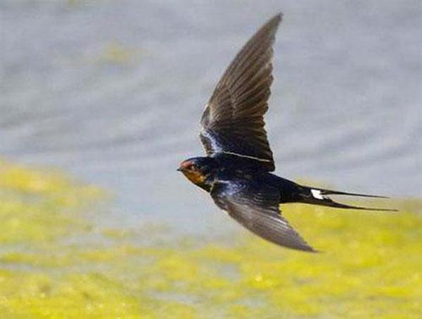 Mùa chim én bay