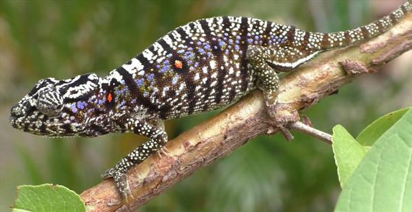 Thế giới động vật: Tìm thấy các loài sau gần 100 năm ngỡ tuyệt chủng