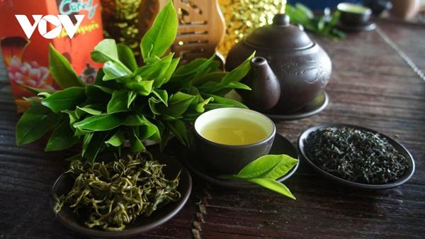 Ngày Tết, đến Tân Cương thưởng thức trà xuân