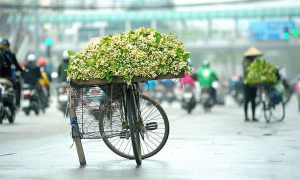 Hoa trên phố