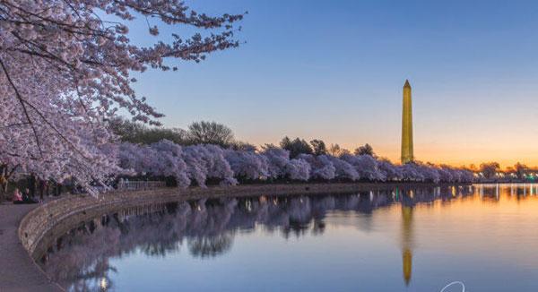 Từ Festivals hoa anh đào ở Washington DC, nhớ về ngày Giỗ Tổ Hùng Vương