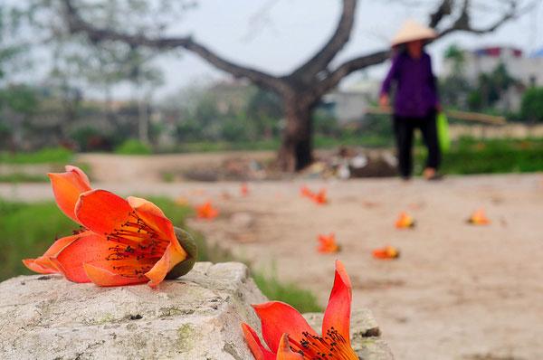 Thương một mùa hoa