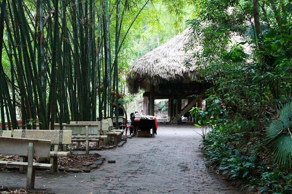 """""""Bản nhạc rừng xanh"""" giữa lòng thành phố Thái Nguyên"""