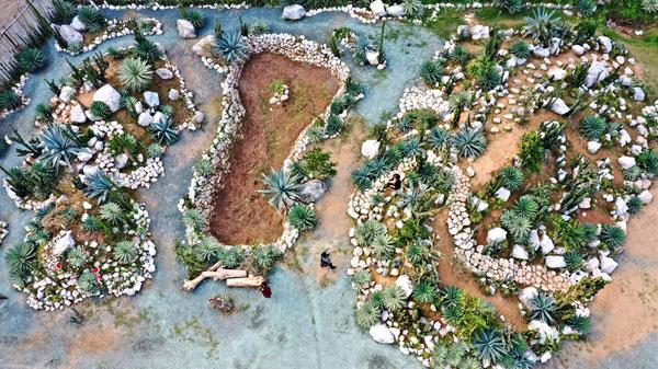 Cacti Zone - Điểm đến mới cho người Hà Nội